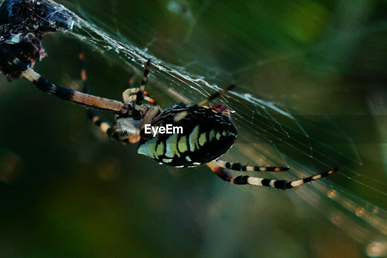 spider web, one animal, spider, animal themes, animals in the wild, focus on foreground, close-up, day, web, no people, nature, insect, outdoors, animal leg, full length, animal wildlife
