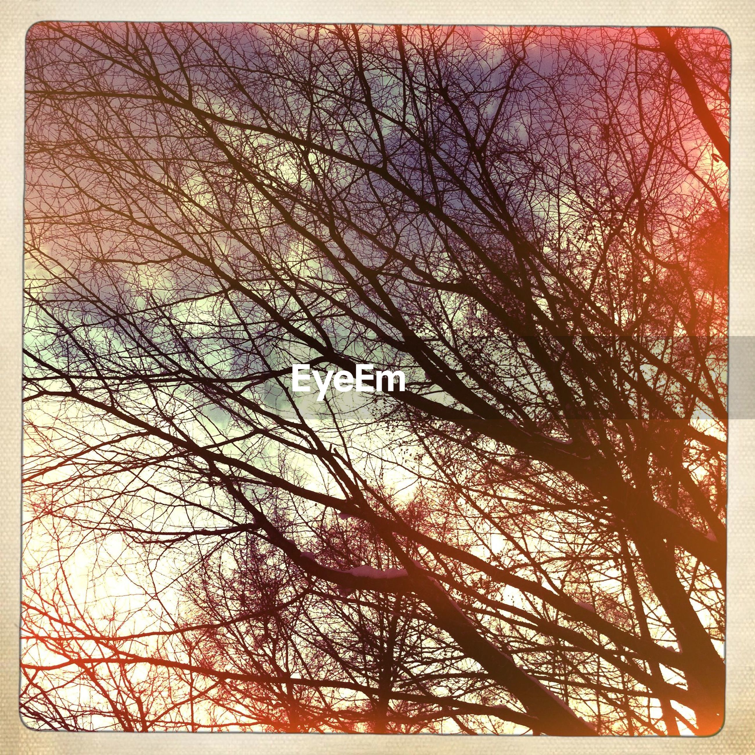 transfer print, bare tree, auto post production filter, branch, tree, low angle view, sky, silhouette, nature, tranquility, outdoors, beauty in nature, no people, backgrounds, sunset, full frame, day, scenics, growth, dusk
