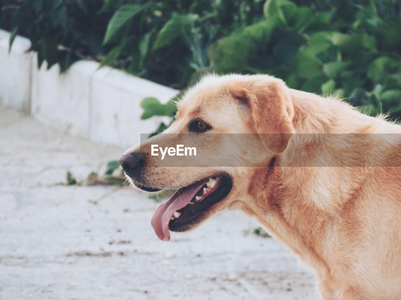 Close-Up Of Dog