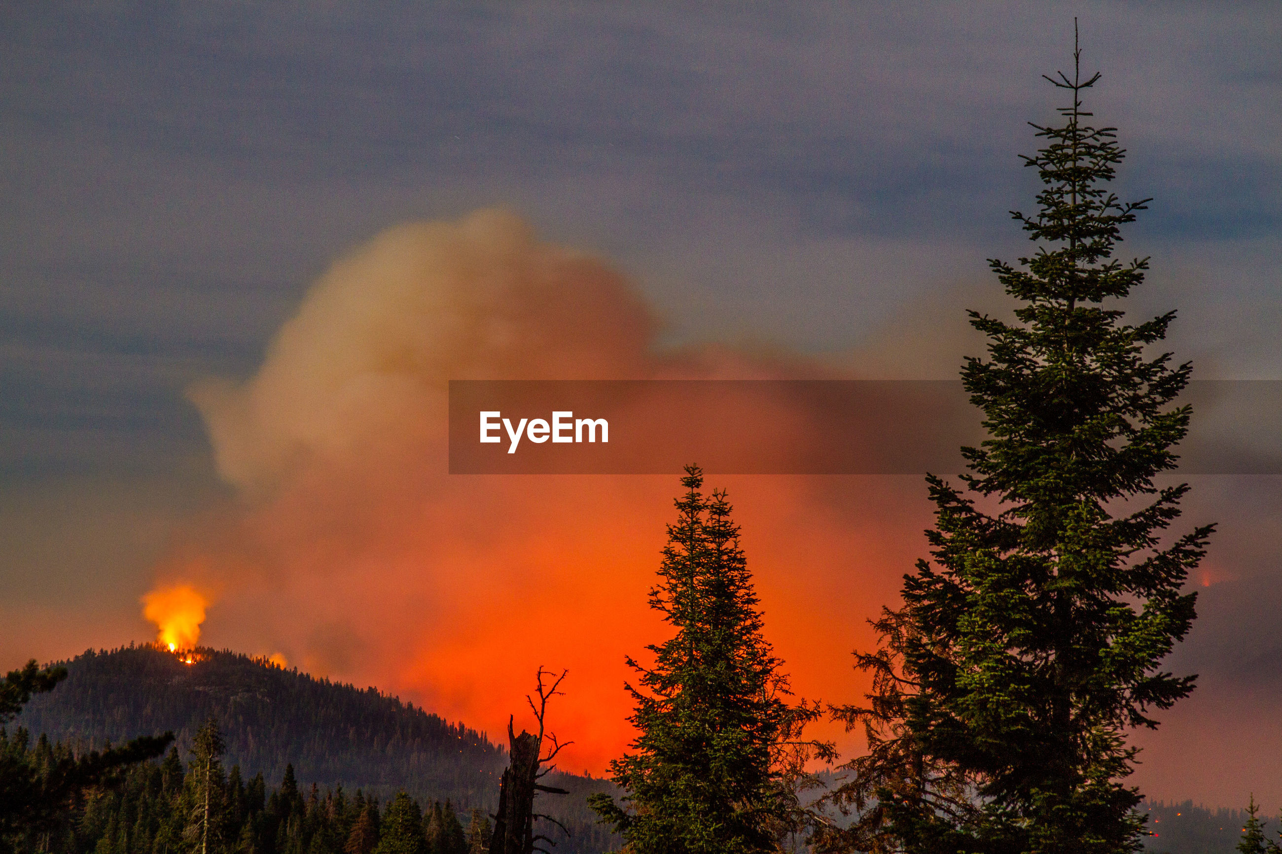Forest fire at dusk