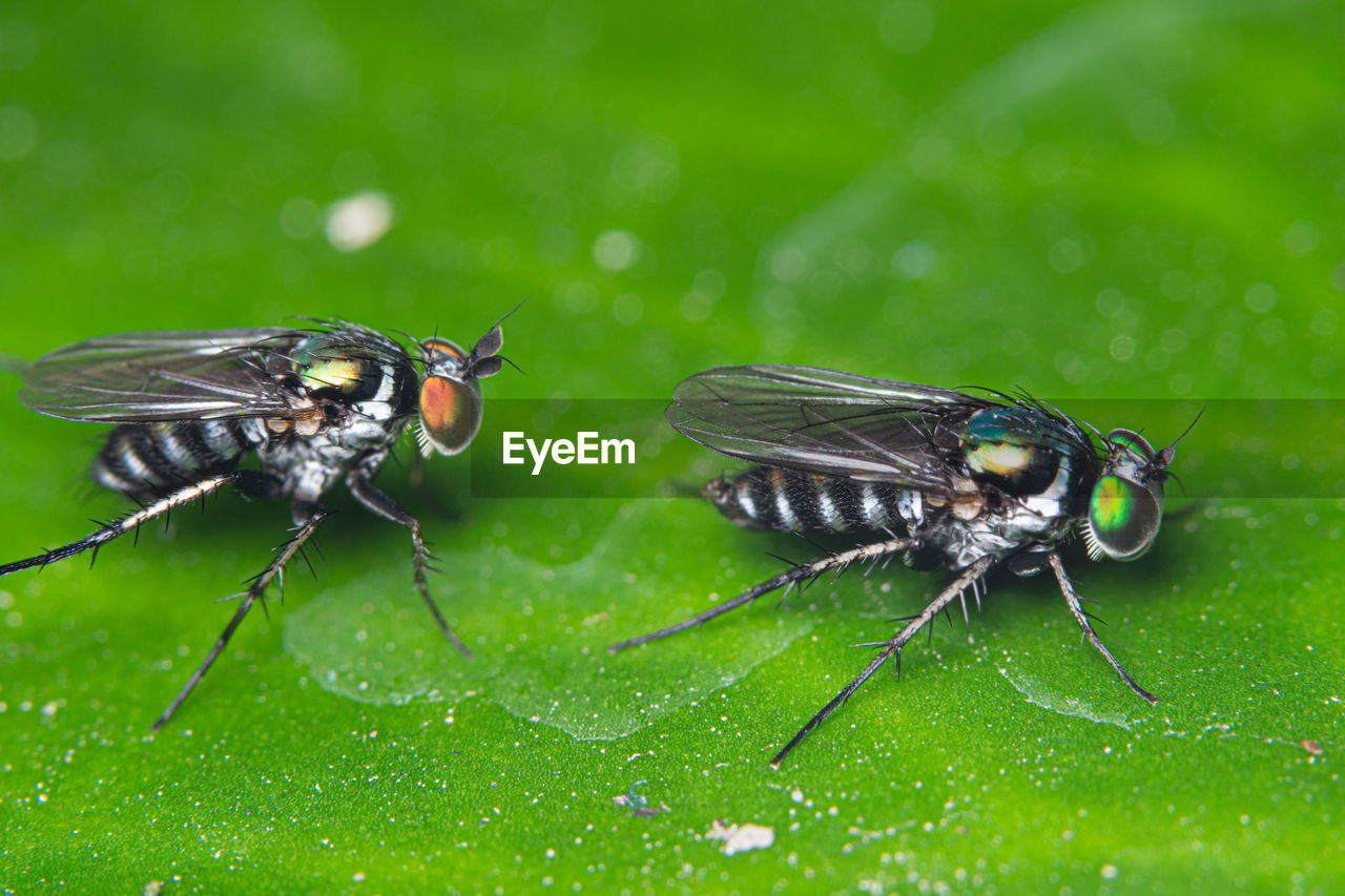 animal, animal themes, insect, animal wildlife, invertebrate, animals in the wild, green color, one animal, close-up, animal wing, plant part, leaf, plant, fly, nature, housefly, no people, day, drop, outdoors