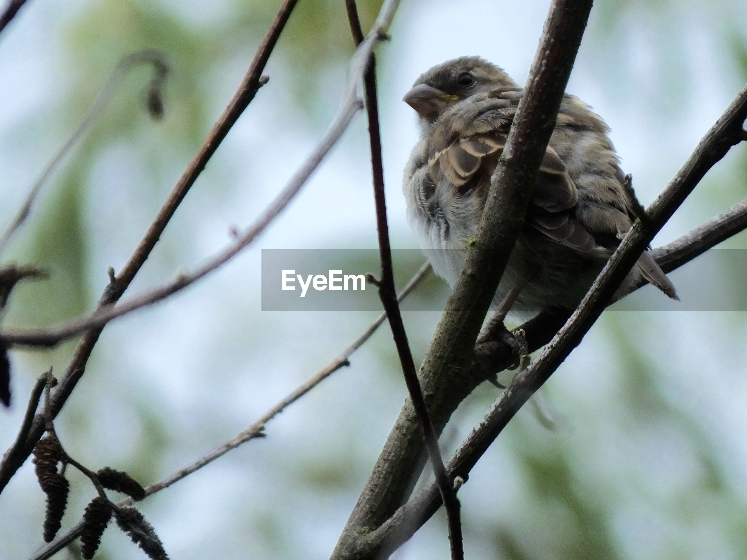 LOW ANGLE VIEW OF BIRD ON BRANCH AGAINST BLURRED PLANTS