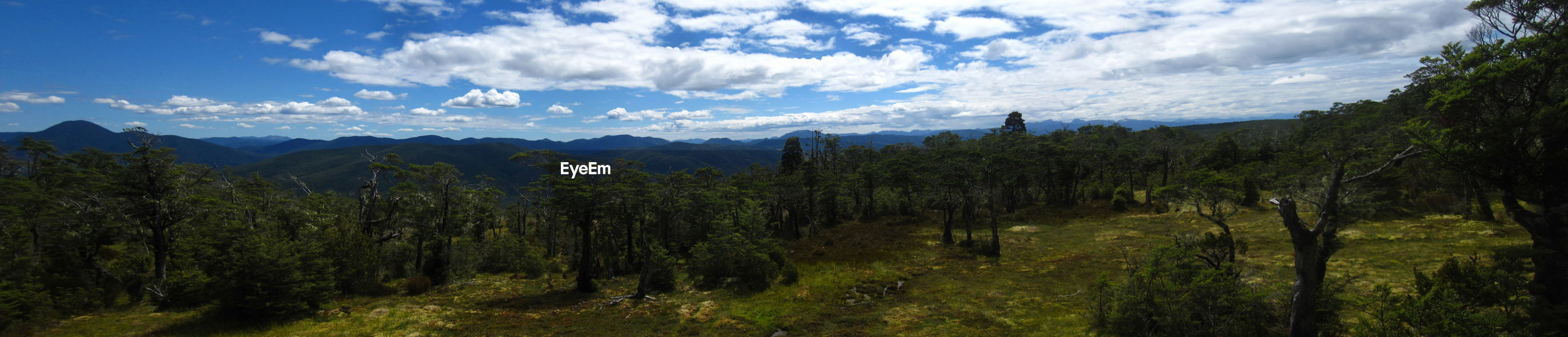 PANORAMIC VIEW OF TREES AND PLANTS AGAINST SKY