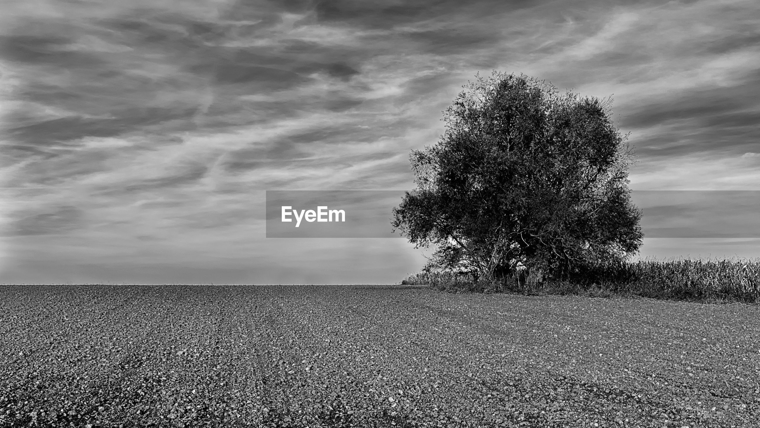 field, landscape, agriculture, nature, tranquility, tranquil scene, beauty in nature, rural scene, sky, growth, scenics, day, outdoors, no people, tree, lone