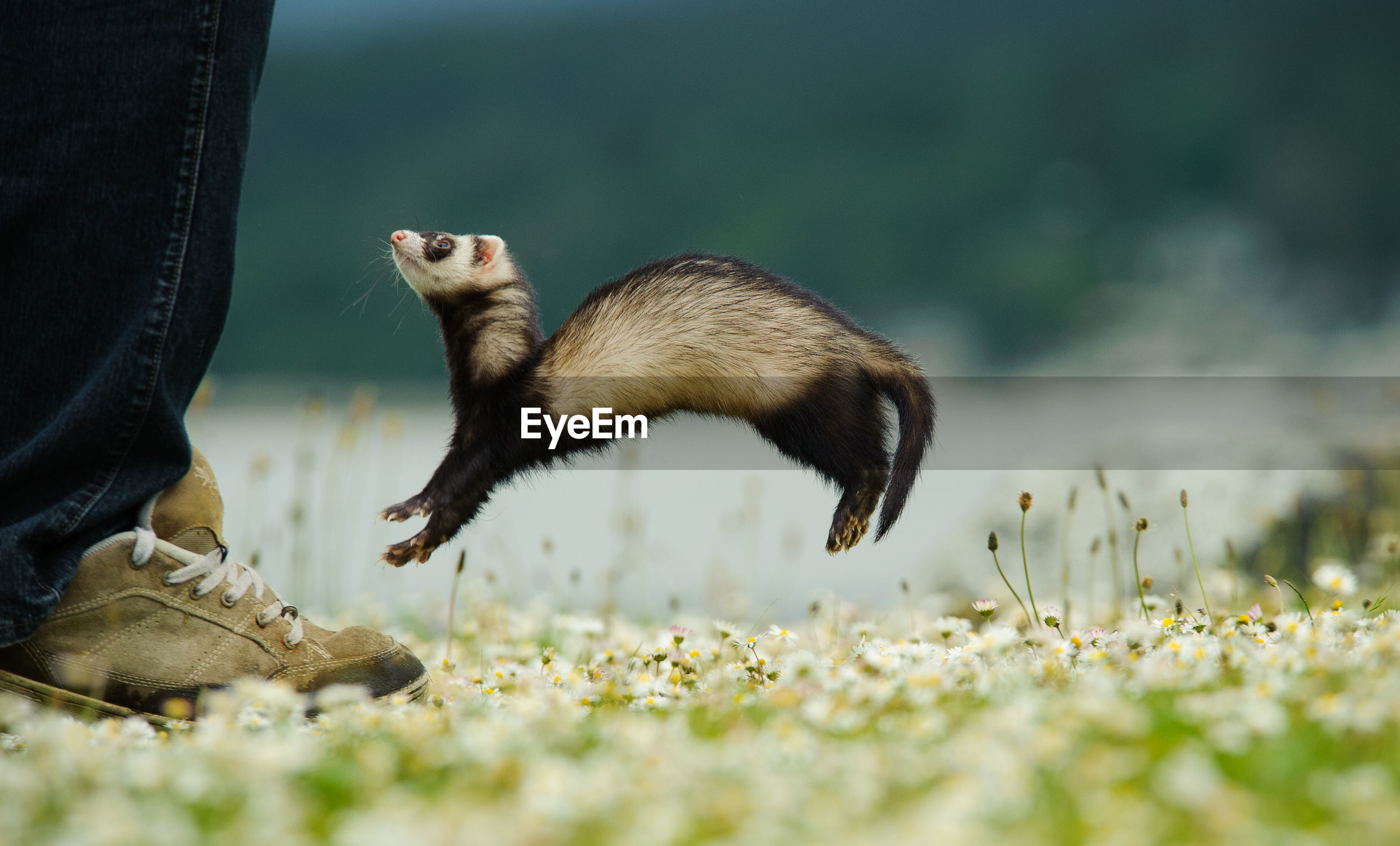 Low angle view of small animal jumping in the air