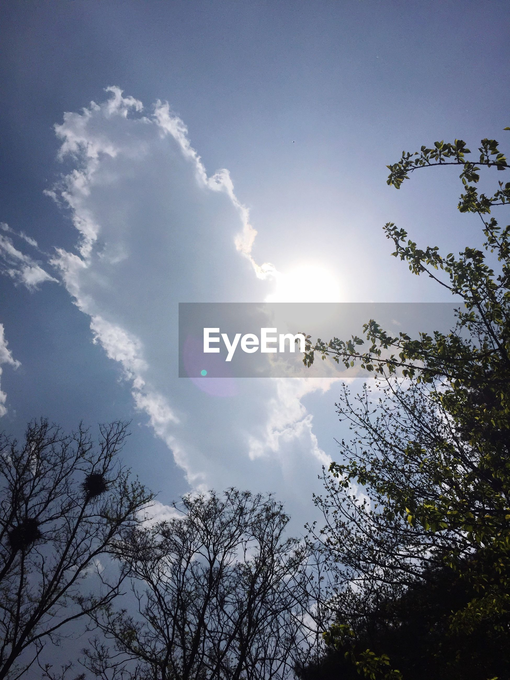 low angle view, tree, sky, branch, sun, silhouette, beauty in nature, nature, tranquility, growth, blue, scenics, sunlight, high section, treetop, cloud - sky, sunbeam, outdoors, tranquil scene, day