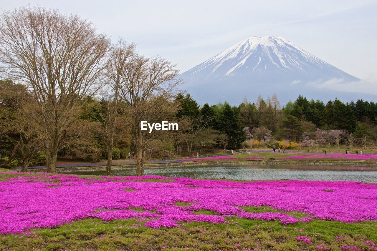 Flowers by pond against mt fuji
