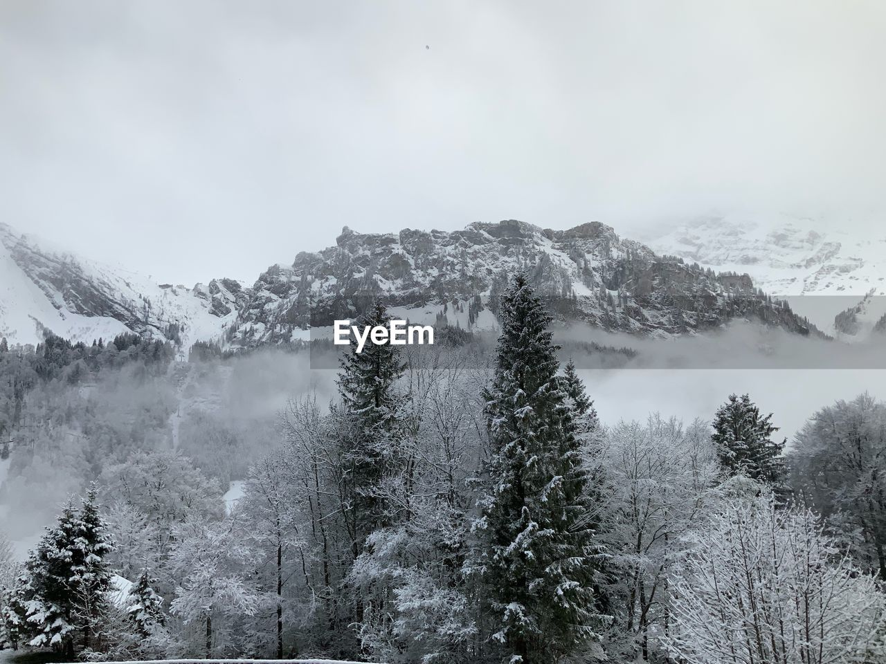tree, plant, beauty in nature, cold temperature, tranquil scene, tranquility, mountain, winter, scenics - nature, sky, snow, no people, non-urban scene, nature, environment, day, growth, idyllic, fog, outdoors, snowcapped mountain, coniferous tree