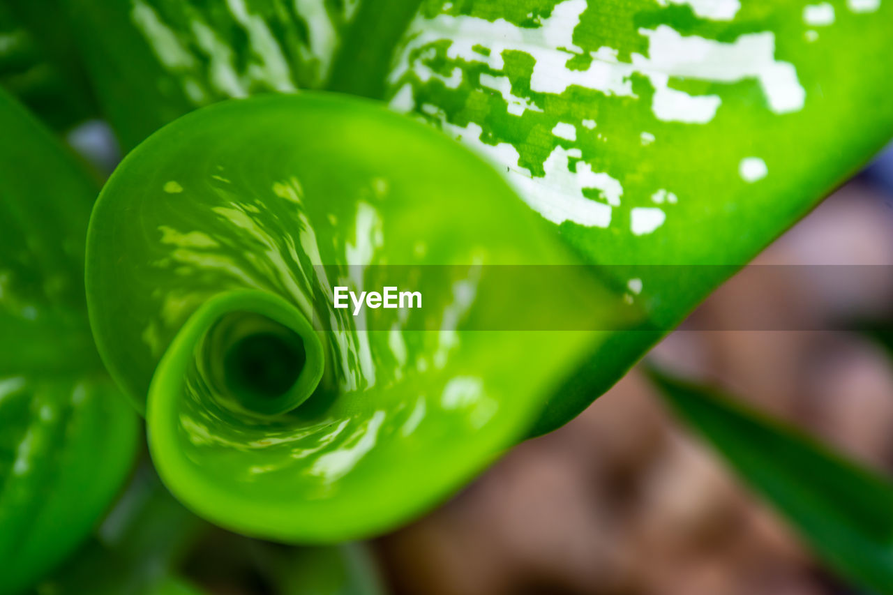 green color, close-up, plant, freshness, beauty in nature, no people, growth, focus on foreground, leaf, nature, plant part, selective focus, day, vulnerability, food and drink, outdoors, high angle view, water, still life, flower