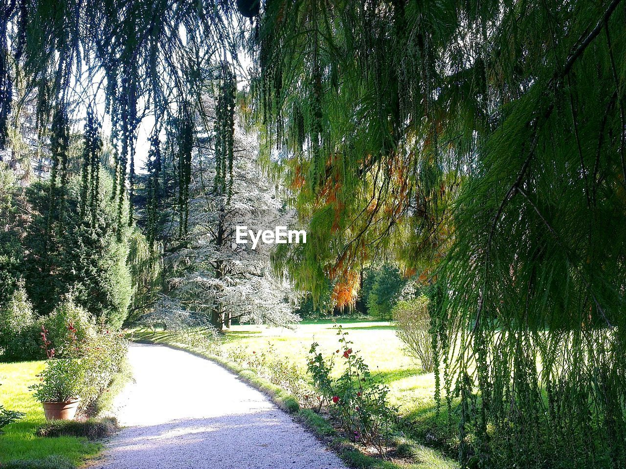 nature, tree, tranquil scene, tranquility, beauty in nature, scenics, the way forward, road, growth, no people, outdoors, day, grass, green color, plant, forest, transportation, landscape, water, sky