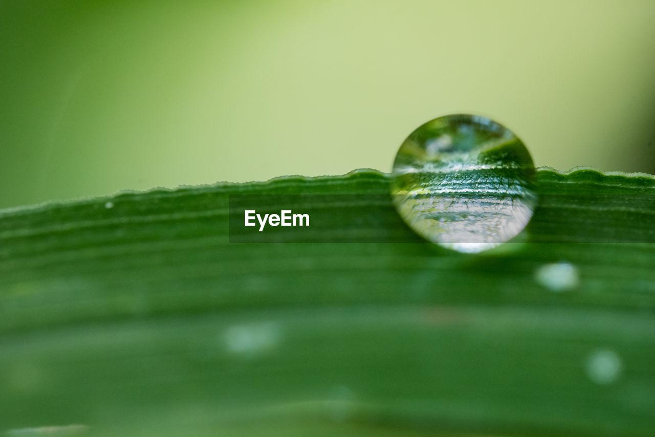 green color, selective focus, plant part, leaf, drop, close-up, nature, plant, no people, water, beauty in nature, growth, vulnerability, reflection, macro, day, purity, fragility, wet, outdoors, dew, blade of grass, leaves
