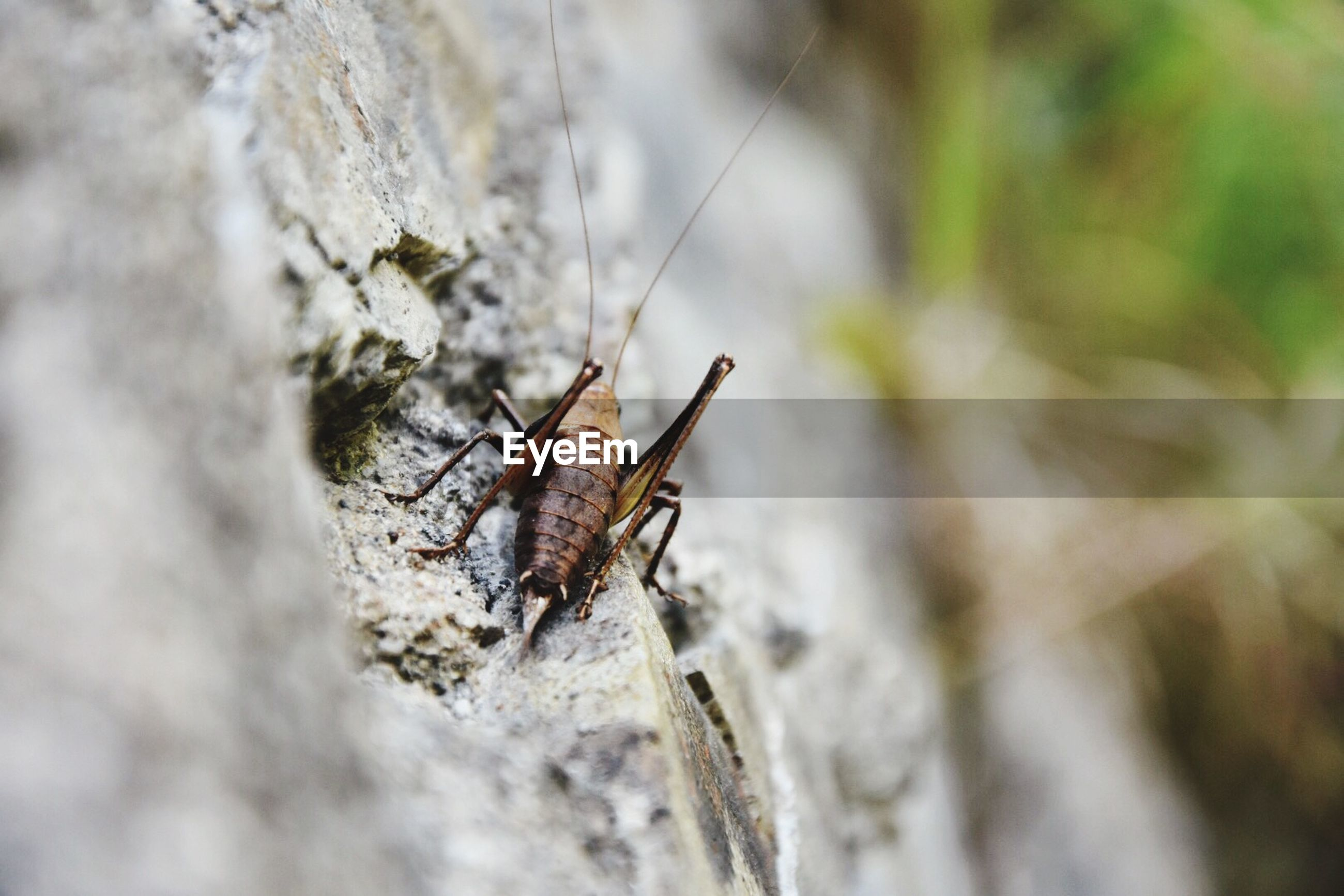 insect, animal themes, animals in the wild, one animal, wildlife, close-up, focus on foreground, selective focus, nature, spider, outdoors, animal antenna, arthropod, full length, day, animal wing, zoology, no people, invertebrate, high angle view