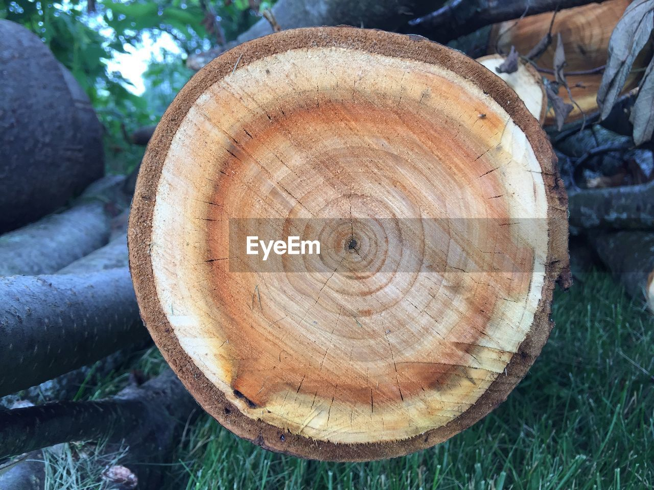 tree, close-up, wood - material, log, day, timber, focus on foreground, forest, wood, nature, land, plant, no people, outdoors, shape, field, deforestation, cross section, textured, tree ring, bark