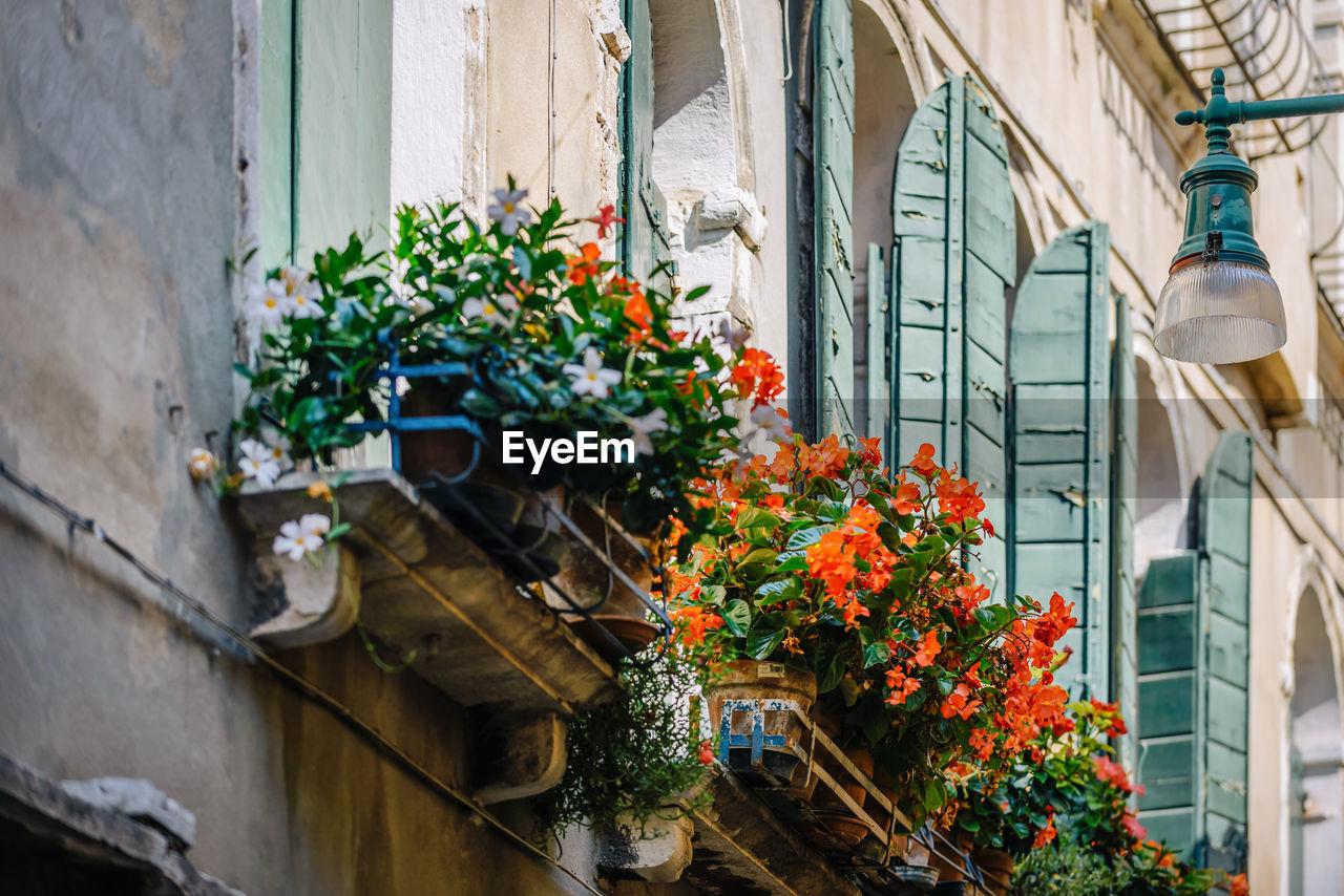 Blooming flowers against building in city
