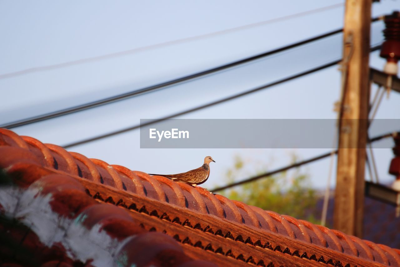 LOW ANGLE VIEW OF A BIRD ON ROOF