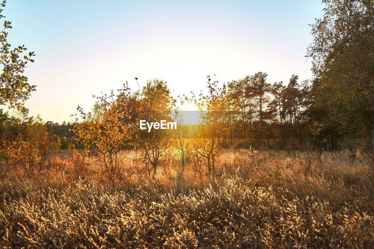 sky, plant, tranquility, beauty in nature, tranquil scene, tree, scenics - nature, land, sunlight, field, nature, no people, growth, sunset, non-urban scene, landscape, clear sky, environment, grass, day, outdoors