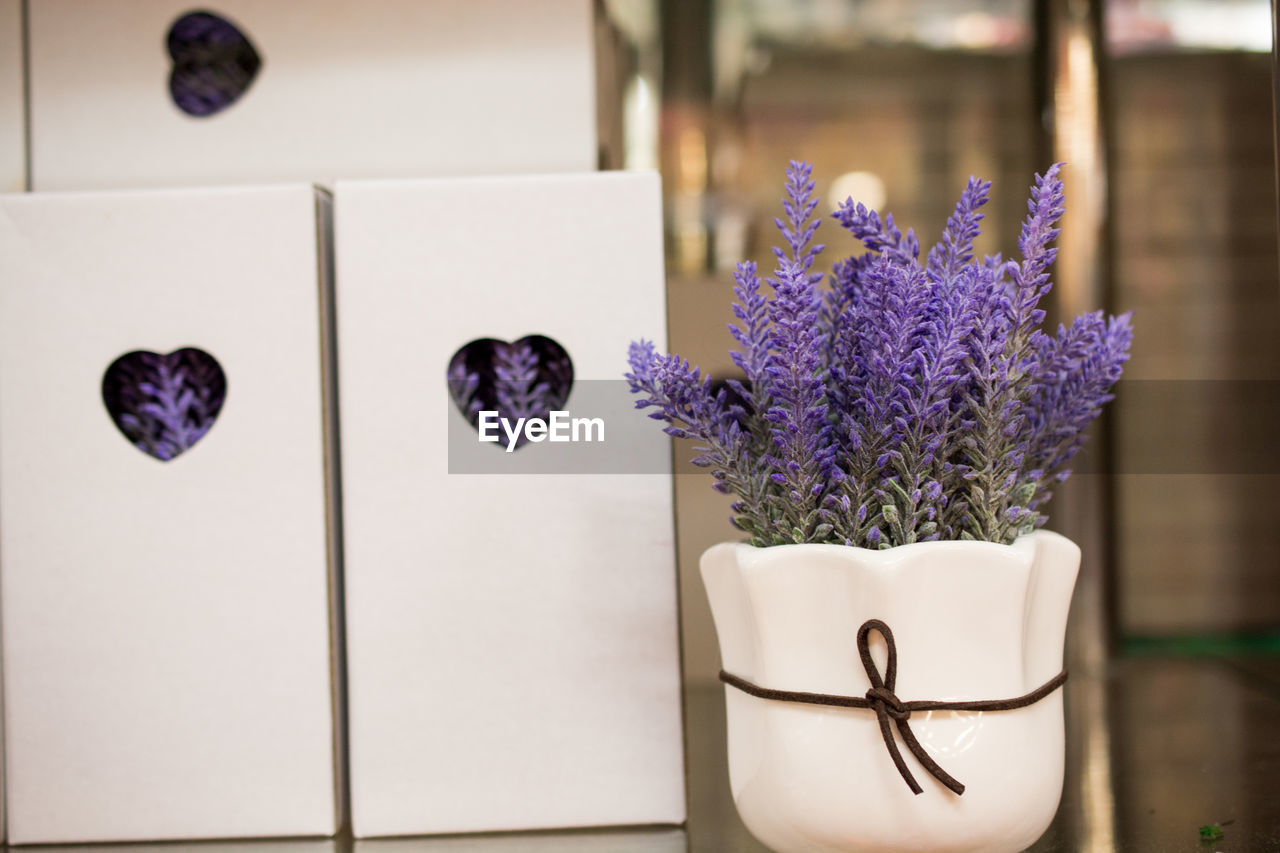 purple, flower, flowering plant, plant, freshness, close-up, no people, indoors, table, focus on foreground, nature, vase, lavender, vulnerability, decoration, still life, container, flower head, fragility, beauty in nature, flower arrangement