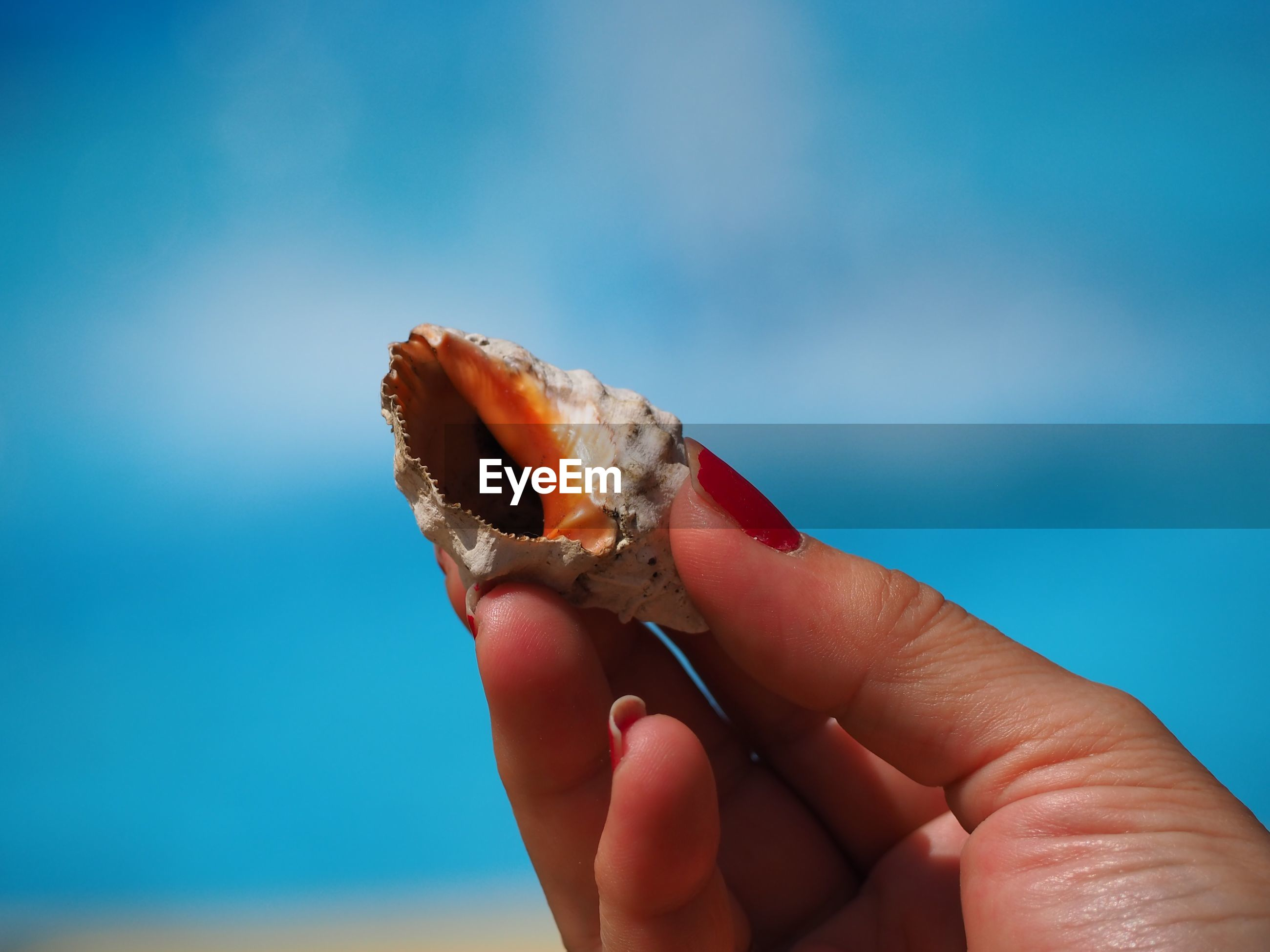 Cropped image of hand holding seashell