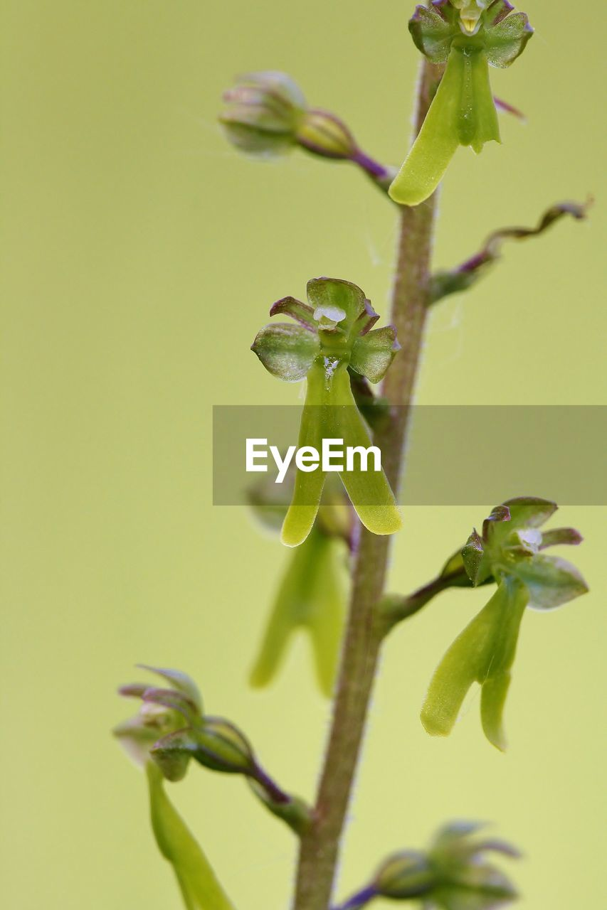 growth, green color, plant, close-up, plant part, beauty in nature, leaf, no people, nature, fragility, vulnerability, plant stem, beginnings, day, focus on foreground, selective focus, flower, outdoors, flowering plant, bud