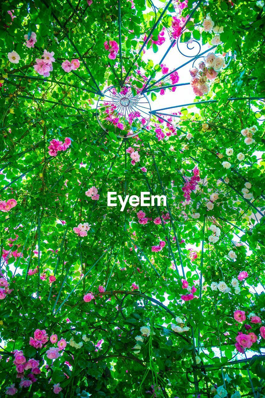 plant, growth, tree, green color, flower, flowering plant, nature, no people, day, pink color, outdoors, branch, freshness, beauty in nature, fragility, high angle view, close-up, vulnerability, springtime, land