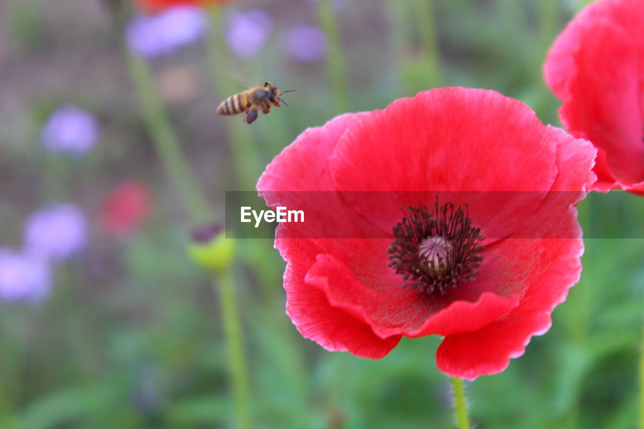 flowering plant, flower, fragility, petal, vulnerability, beauty in nature, freshness, insect, flower head, plant, growth, close-up, animals in the wild, animal wildlife, invertebrate, animal, animal themes, inflorescence, bee, one animal, no people, pollination, pollen