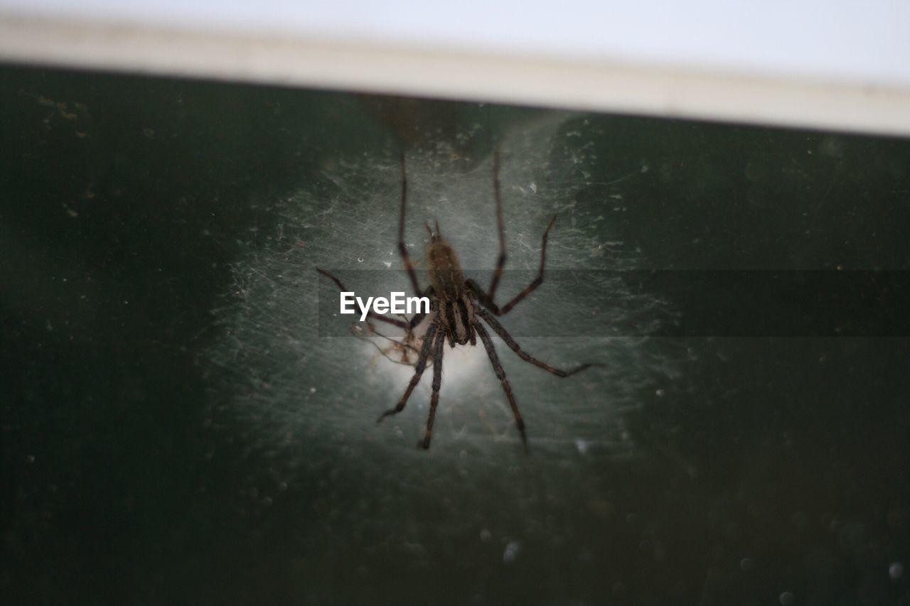 one animal, spider, animal themes, animals in the wild, no people, animal wildlife, insect, close-up, indoors, day, nature