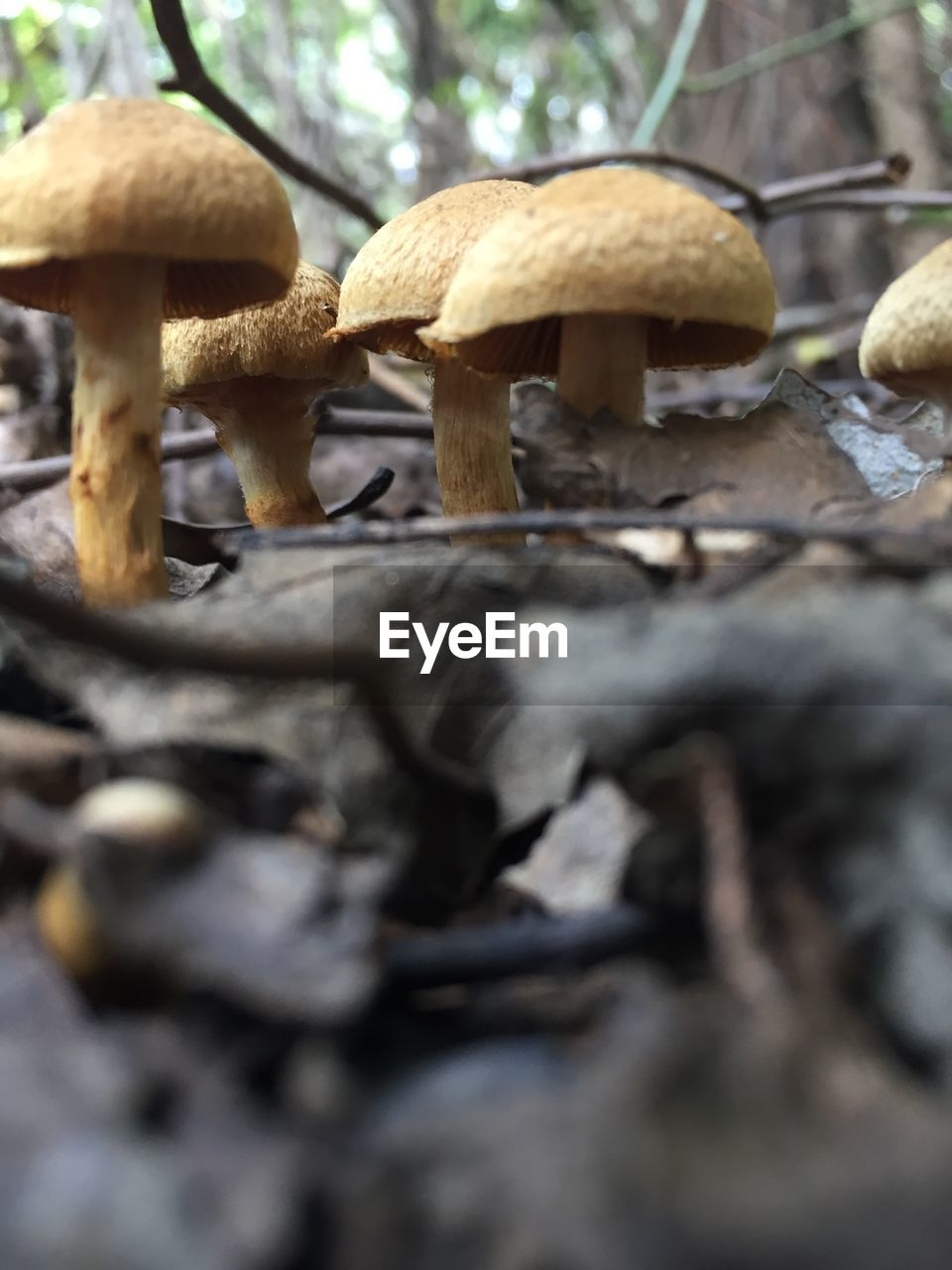 fungus, mushroom, food, selective focus, toadstool, vegetable, growth, close-up, plant, land, no people, food and drink, nature, day, surface level, edible mushroom, tree, forest, field, beauty in nature, outdoors