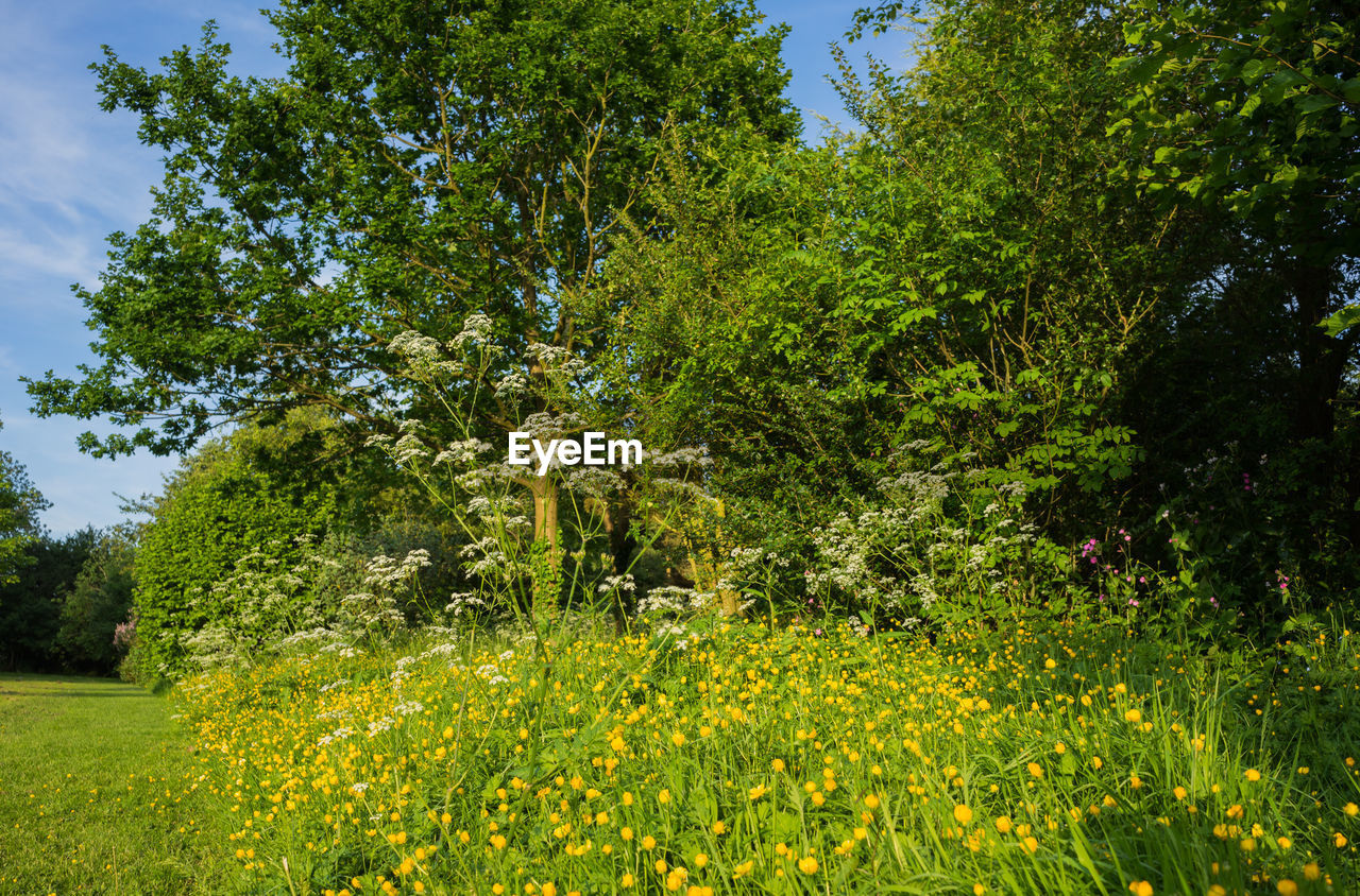 nature, growth, flower, vegetation, day, adventure, tree, beauty in nature, outdoors, no people