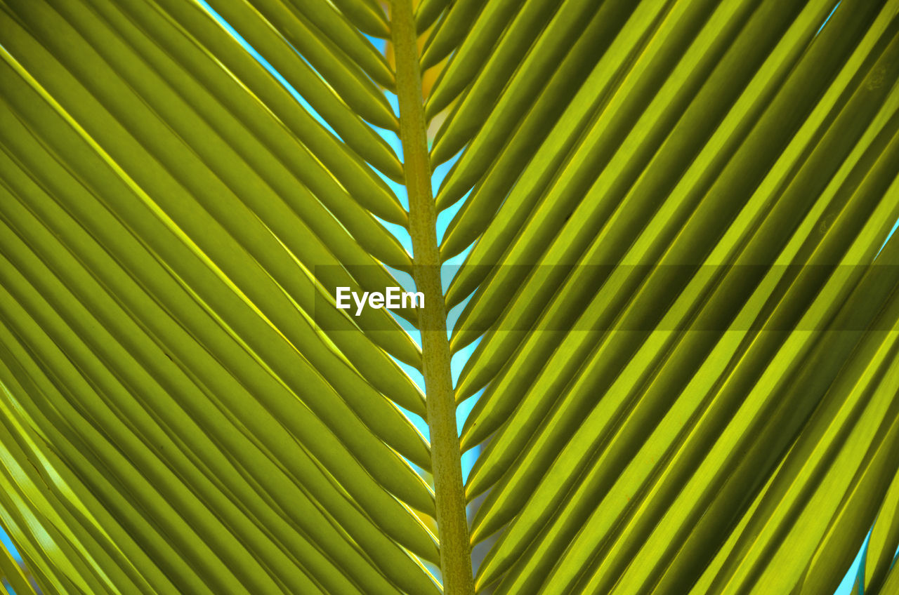 leaf, plant part, green color, full frame, palm tree, growth, backgrounds, pattern, close-up, no people, natural pattern, beauty in nature, plant, nature, palm leaf, frond, botany, tropical climate, day, outdoors, leaves