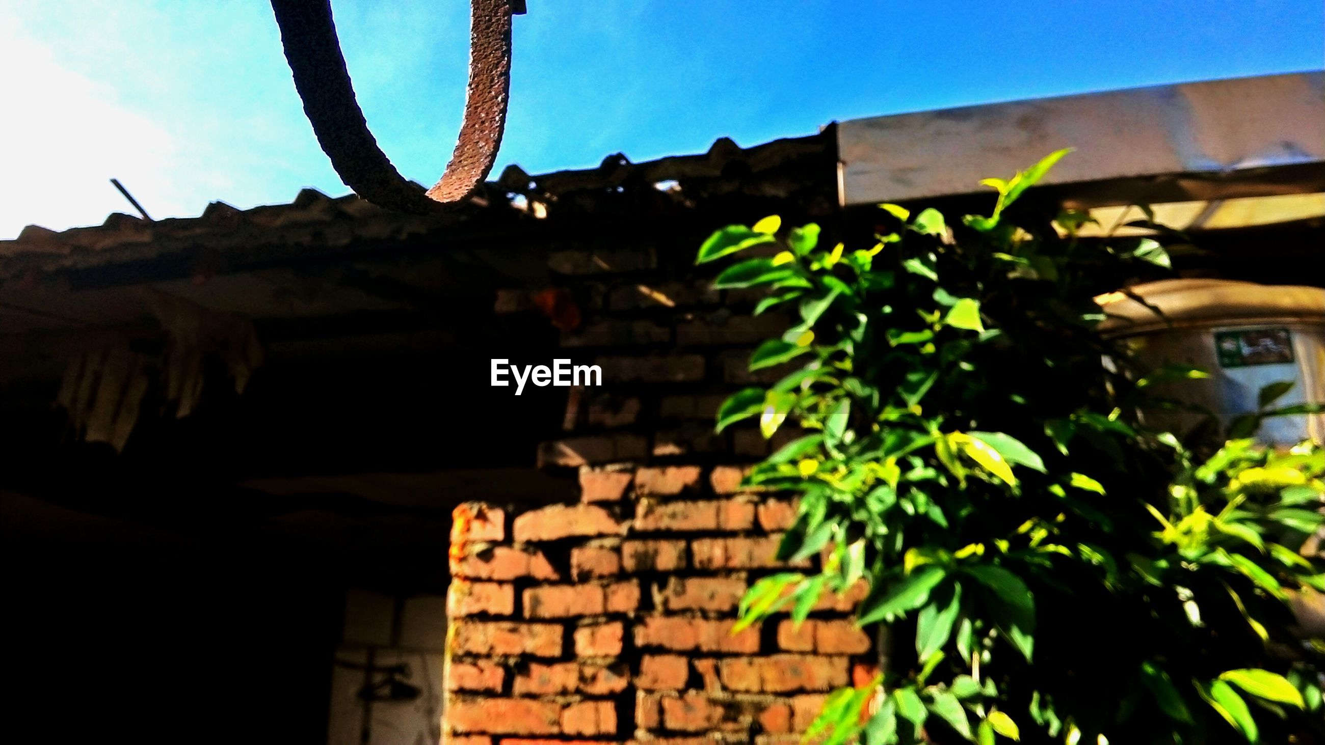 building exterior, architecture, built structure, house, low angle view, old, residential structure, plant, growth, sky, residential building, abandoned, sunlight, outdoors, no people, stone wall, day, building, wall - building feature, tree