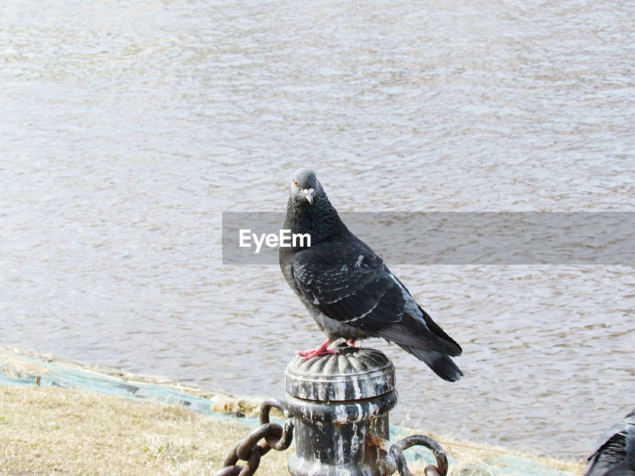 water, bird, animal themes, animals in the wild, no people, day, one animal, animal wildlife, outdoors, nature, perching, close-up