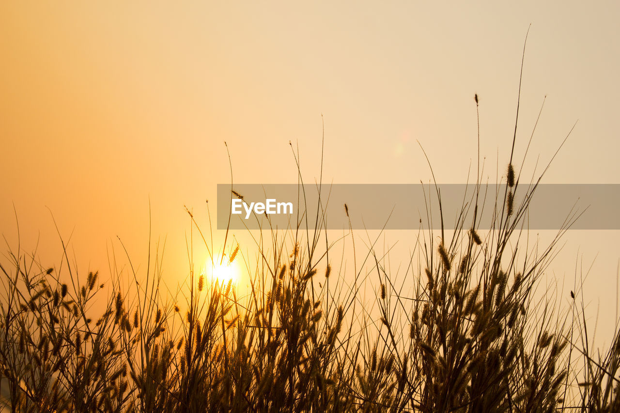 plant, sky, sunset, growth, beauty in nature, tranquility, nature, tranquil scene, sun, no people, field, land, crop, scenics - nature, agriculture, grass, rural scene, close-up, landscape, sunlight, outdoors, stalk, timothy grass