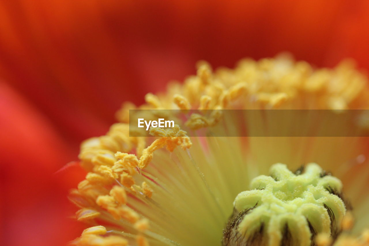 flower, petal, flower head, freshness, fragility, beauty in nature, close-up, growth, selective focus, nature, no people, pollen, stamen, plant, blooming, day, outdoors