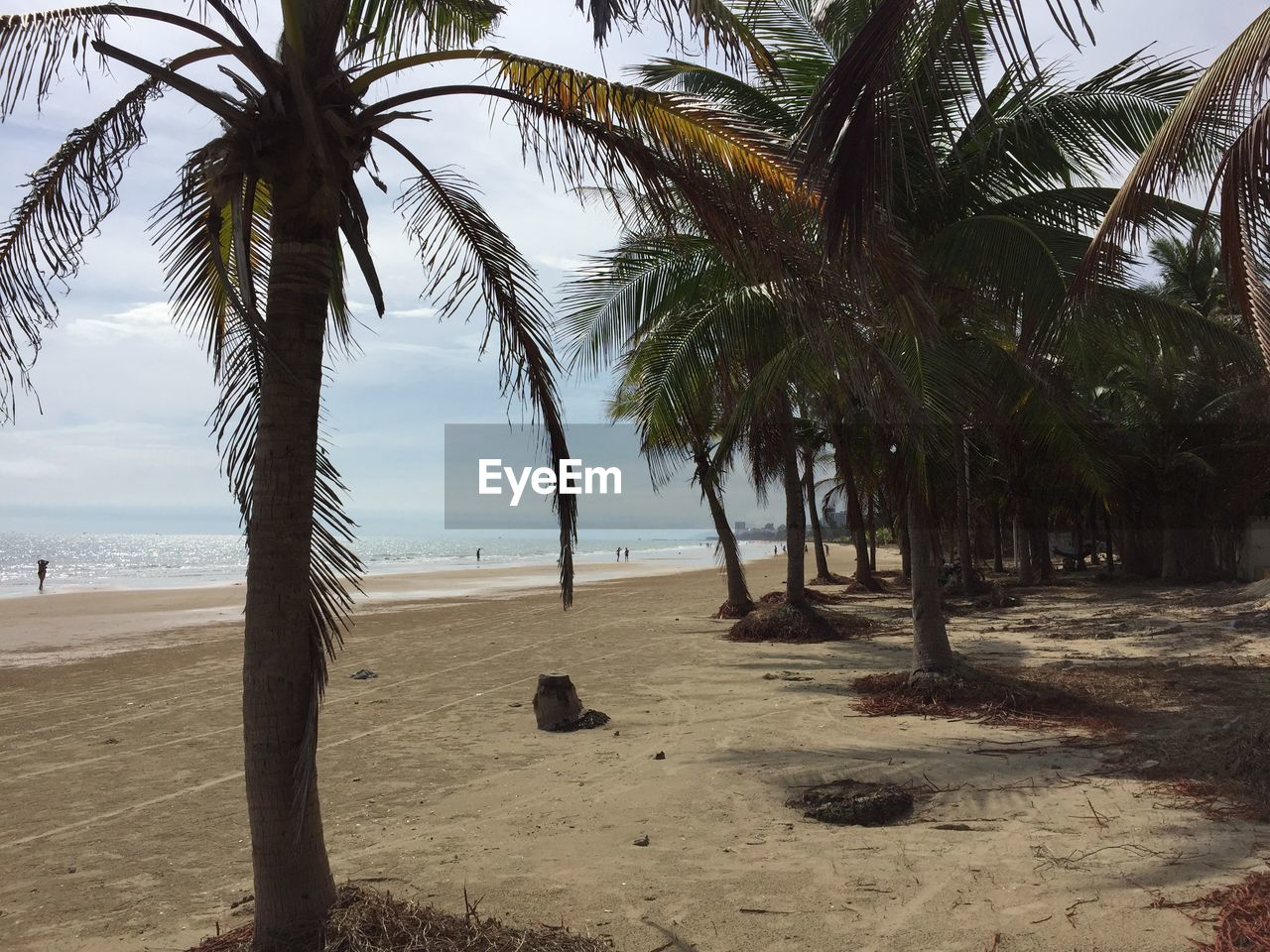 beach, palm tree, sea, sand, tree, tranquil scene, shore, tranquility, nature, scenics, water, horizon over water, beauty in nature, day, outdoors, tree trunk, growth, no people, sky