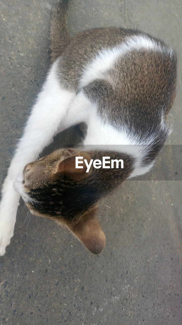 high angle view, one animal, animal themes, domestic cat, domestic animals, mammal, pets, feline, day, no people, outdoors, close-up
