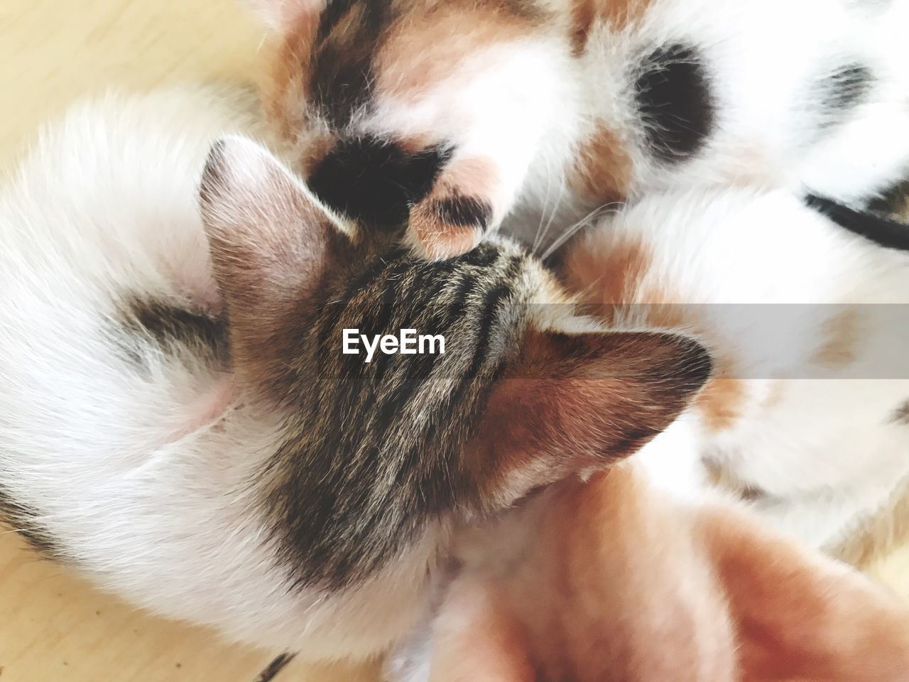 animal themes, mammal, animal, domestic animals, domestic, pets, one animal, cat, feline, vertebrate, relaxation, domestic cat, sleeping, close-up, indoors, no people, high angle view, young animal, resting, kitten, whisker, animal family