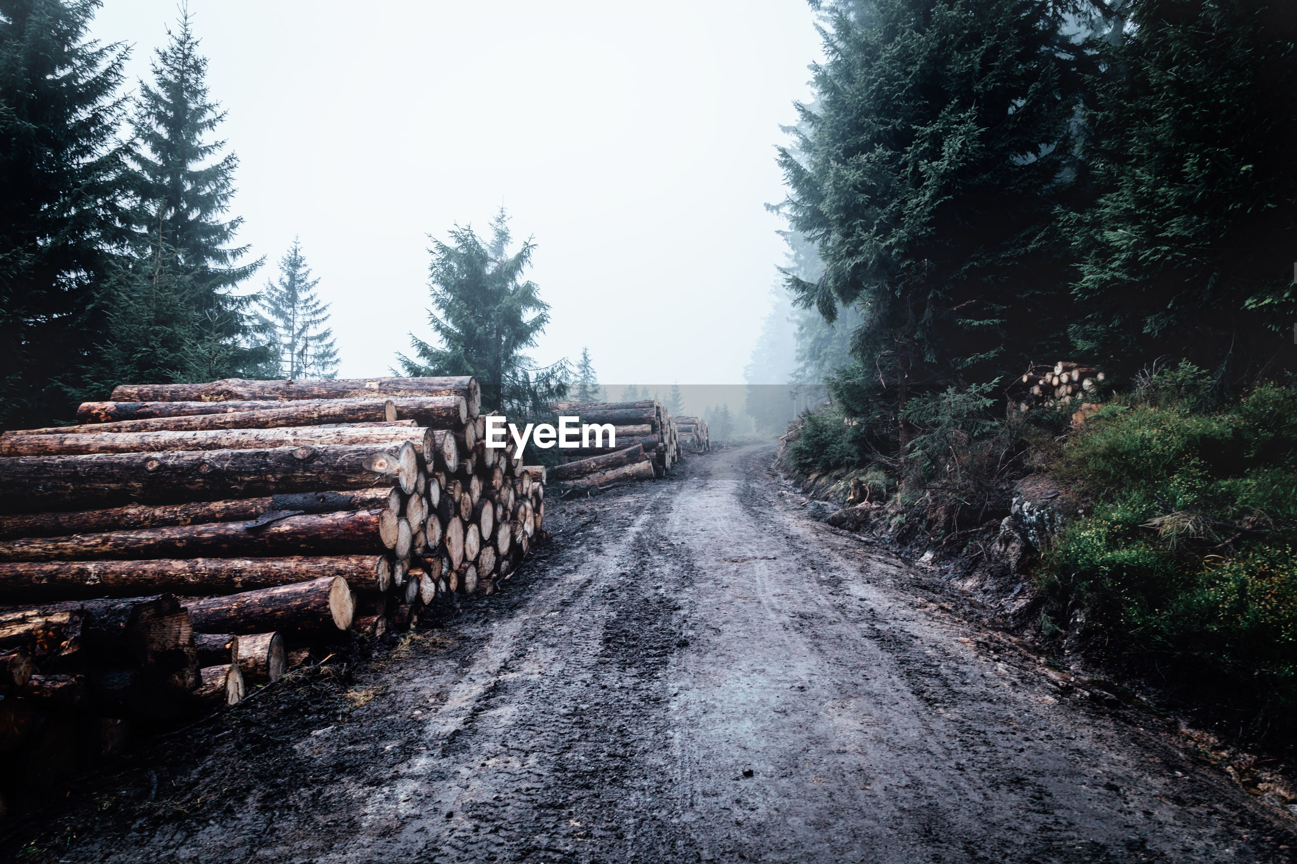 STACK OF LOG IN FOREST