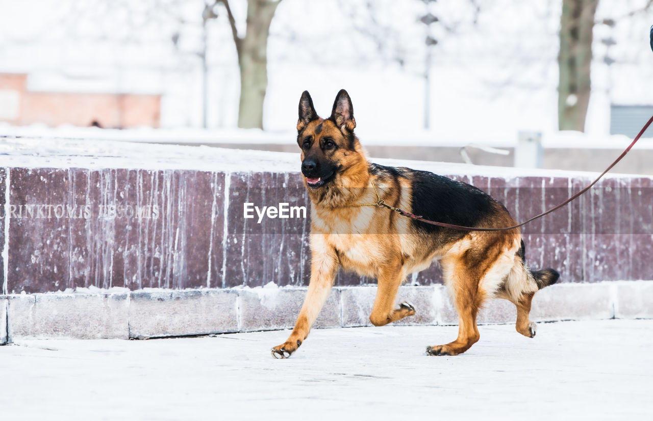 Dog standing in snow