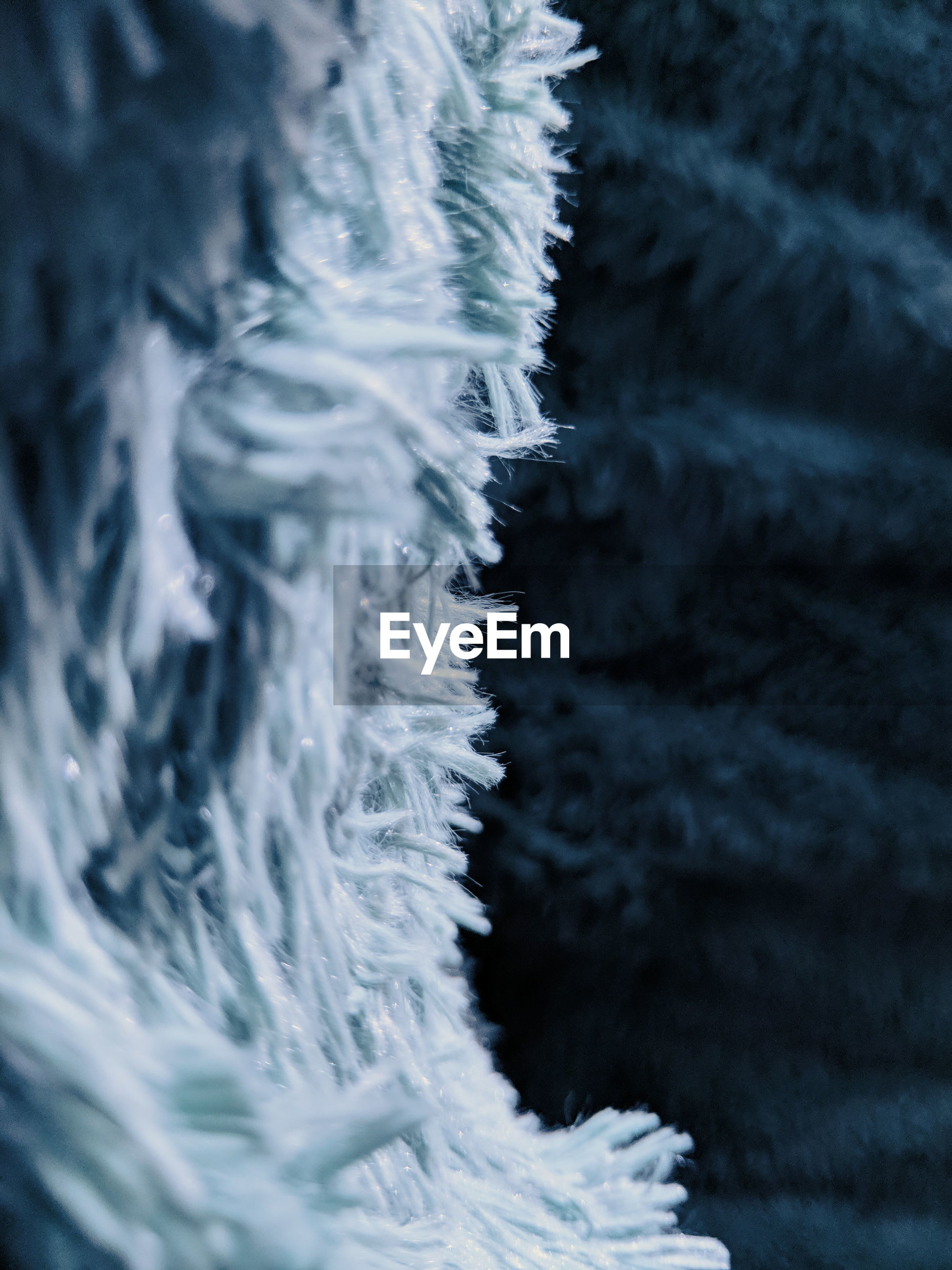 Close-up of textile against tree