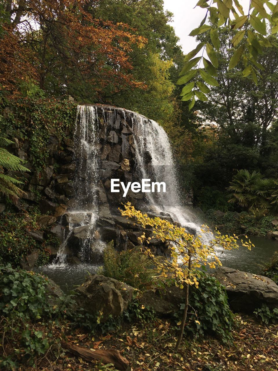 tree, waterfall, plant, water, scenics - nature, long exposure, motion, flowing water, beauty in nature, nature, forest, blurred motion, land, rock, no people, day, flowing, growth, environment, outdoors, power in nature, rainforest, falling water, change, running water