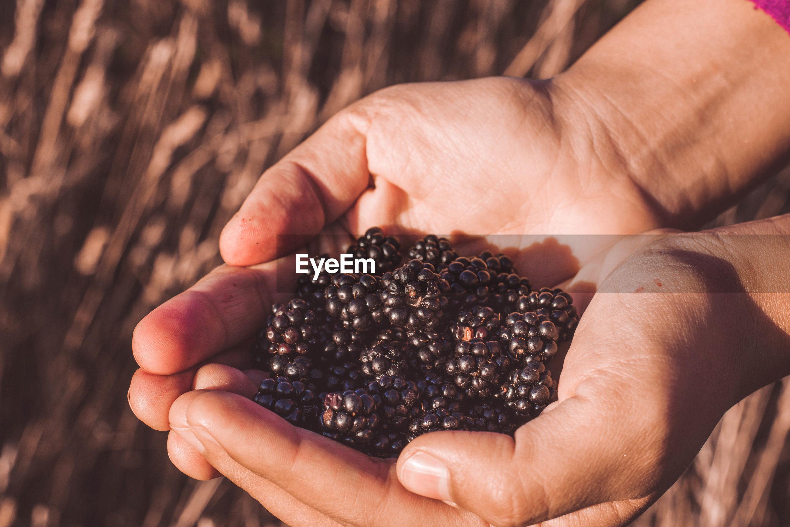 Hands with blackberries