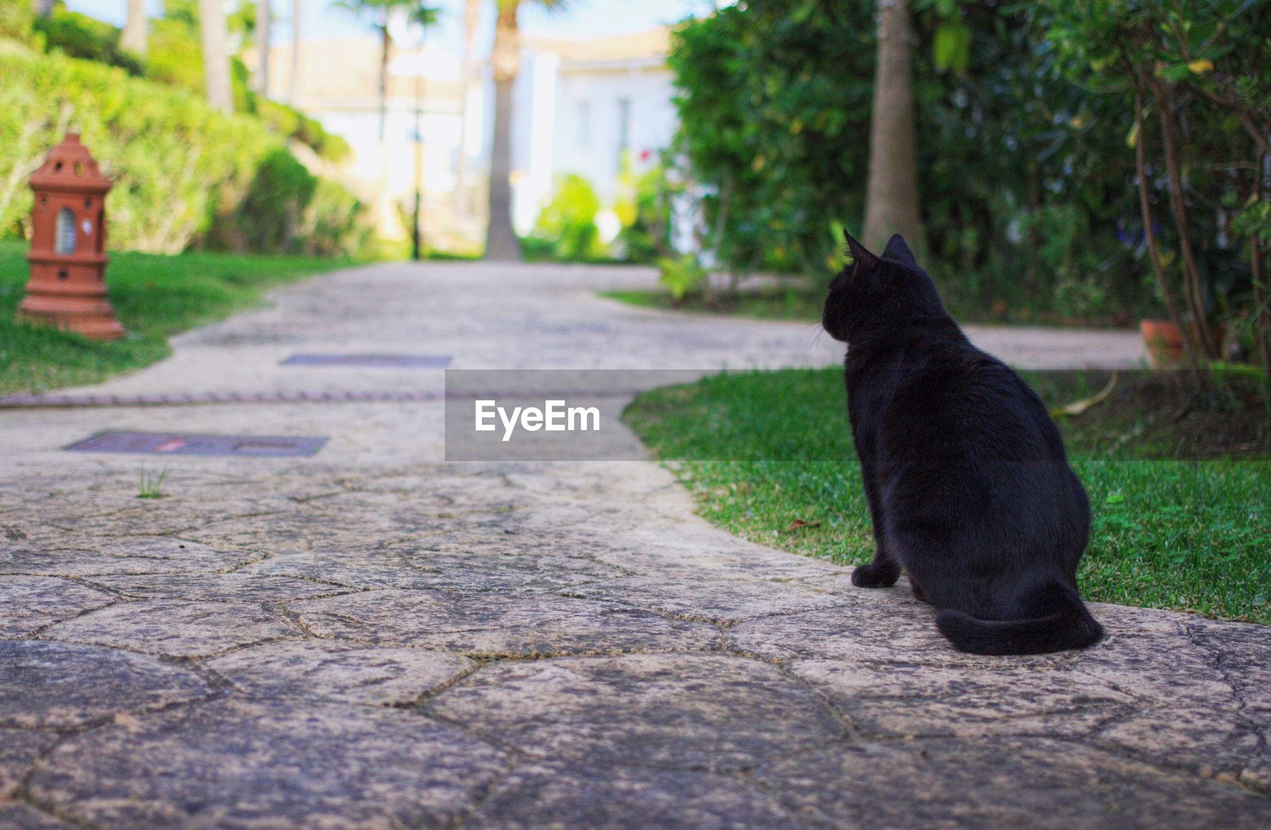 BLACK DOG STANDING ON STREET