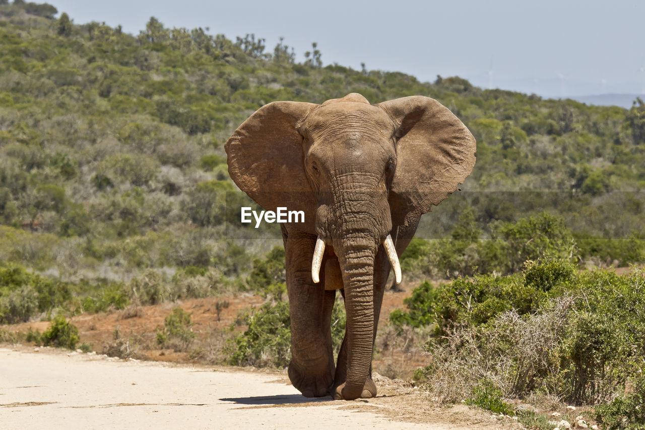 Elephant Amidst Trees