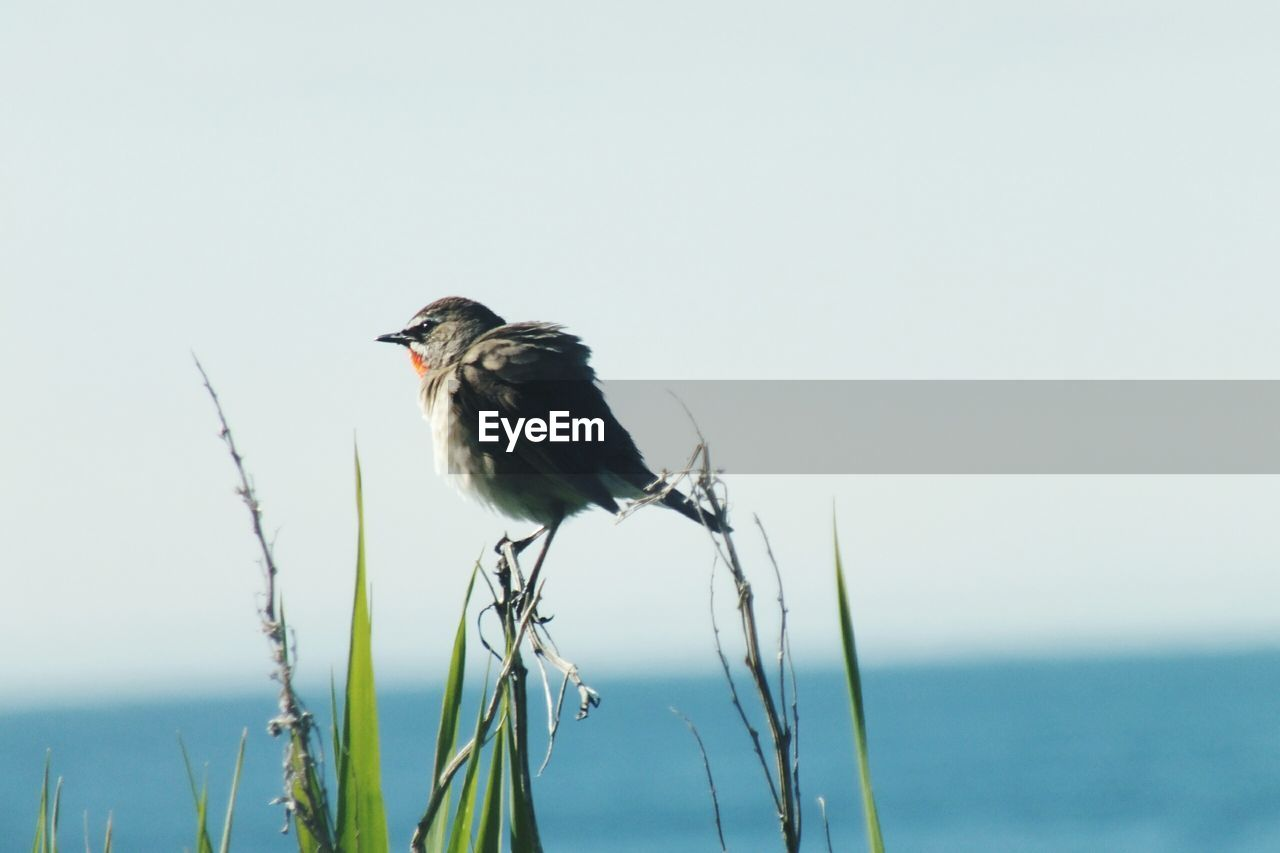 animal, animal themes, bird, vertebrate, animal wildlife, animals in the wild, one animal, sky, water, nature, perching, copy space, no people, day, plant, sea, focus on foreground, beauty in nature, clear sky, outdoors