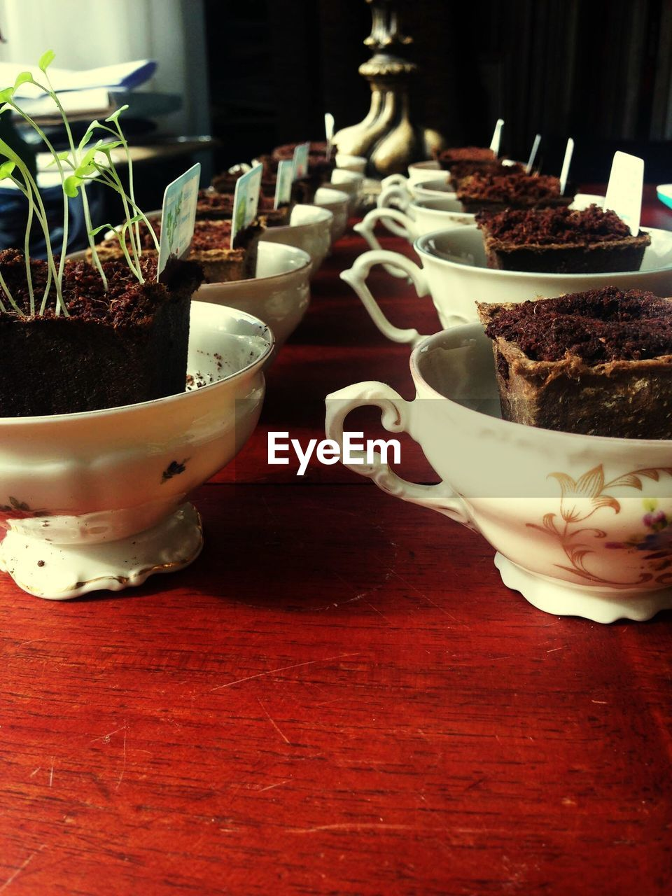 table, indoors, no people, close-up, potted plant, freshness, plant, food, nature, day