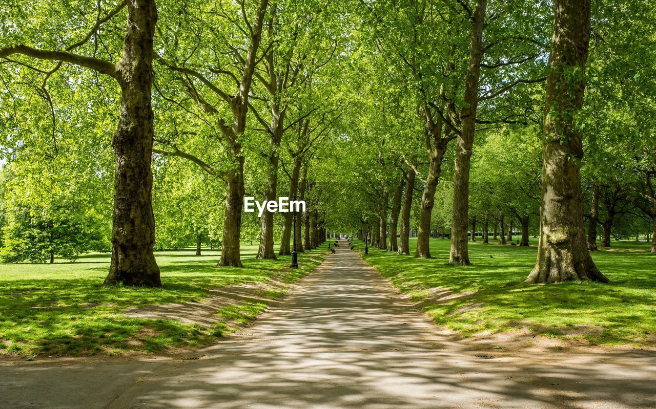 Symmetrical view of footpath in park