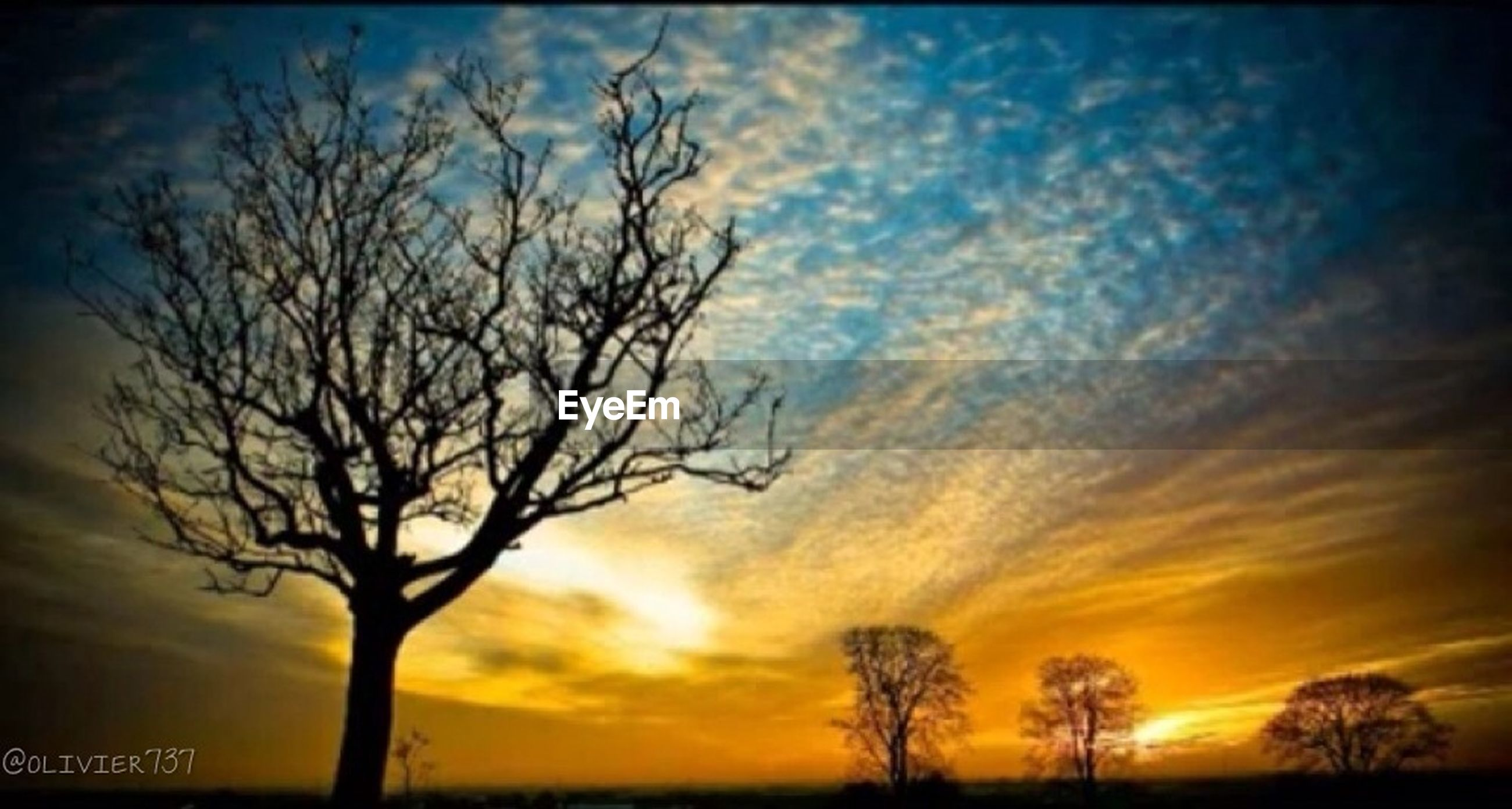 sunset, silhouette, bare tree, sky, tranquility, tranquil scene, beauty in nature, tree, scenics, nature, orange color, cloud - sky, dramatic sky, branch, idyllic, landscape, cloud, low angle view, outdoors, growth