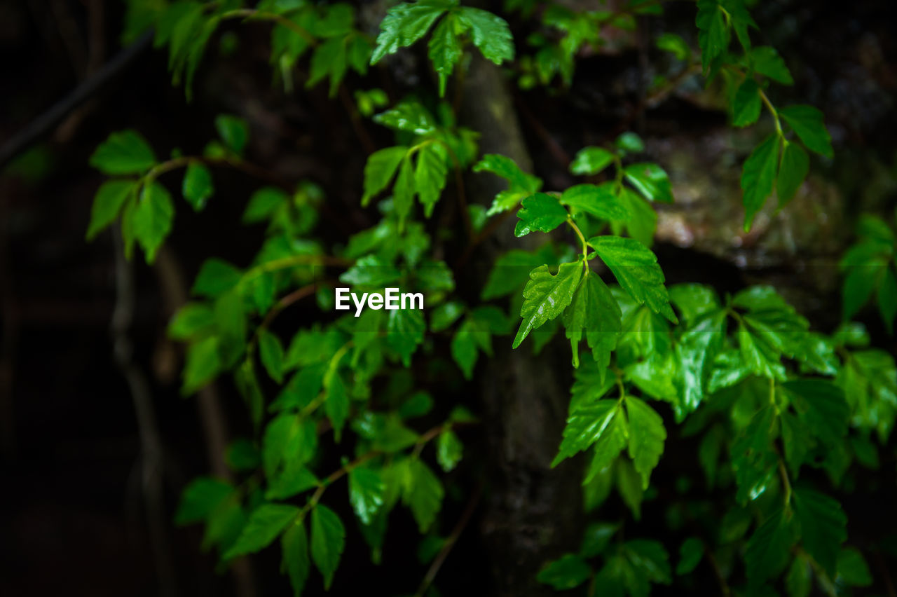 green color, nature, growth, leaf, plant, beauty in nature, outdoors, no people, close-up, day, freshness, fragility