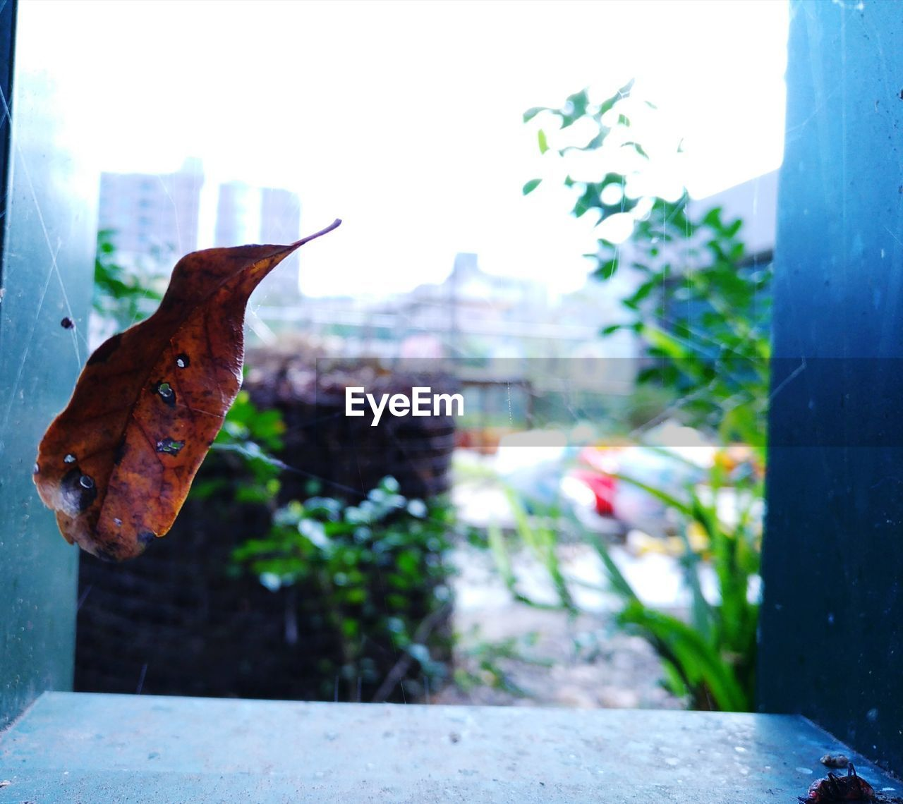 leaf, focus on foreground, day, no people, outdoors, one animal, close-up, nature, animal themes, growth, fragility, freshness