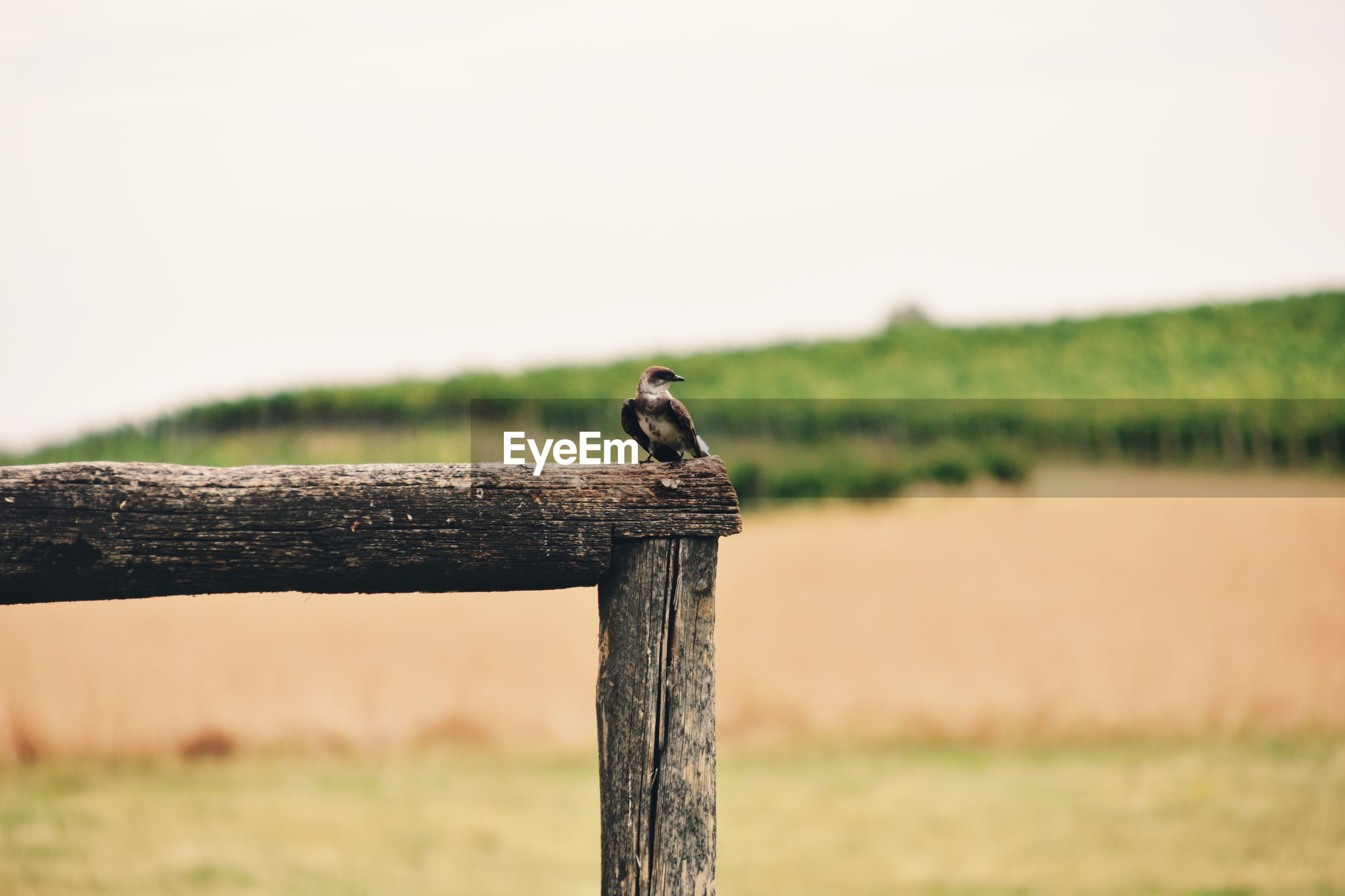 BIRDS PERCHING ON WOODEN POST